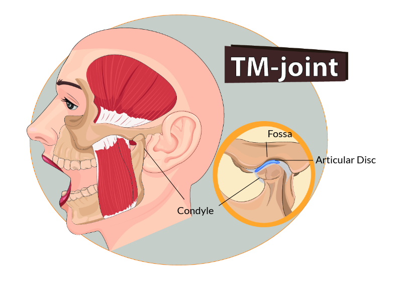 TMJ Jaw Joint